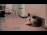 Самое смешное видео о котах mp4
